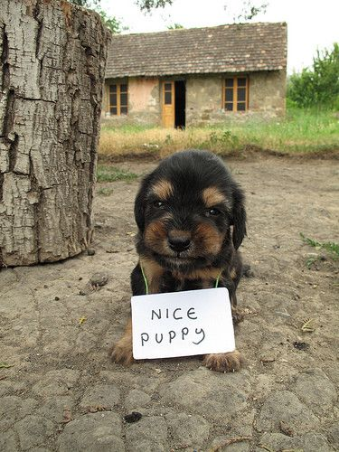 A baby version: Adorable Puppys, Signs, Nice Puppys, At Home, Pet, Dressers, Astrology, Baby Dogs, Little Puppys