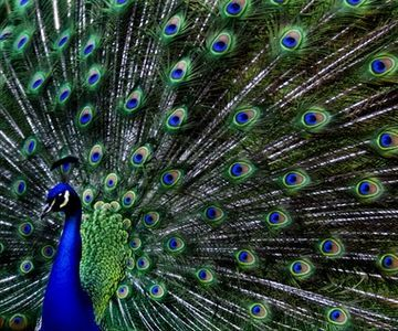 What about peacock feathers to accent your colors?  Google Image Result for http://img.ehowcdn.com/article-new/ehow/images/a06/rl/7r/interesting-peacocks-800x800.jpg