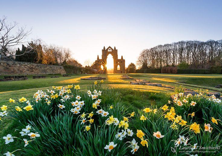 Guisborough Daffodils