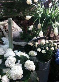 Blomster Station: Här har jag frossat i härliga vita hortensior som är en stor favorit. Det blir jätte fint att komponera ihop olika vita blommor med lite zink och gamla korgar av alla de slag. Alltid har man något i sina förråd som kan komma till nytta.