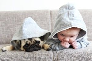 Pug and baby wearing matching outfits, dressed up in hoodies