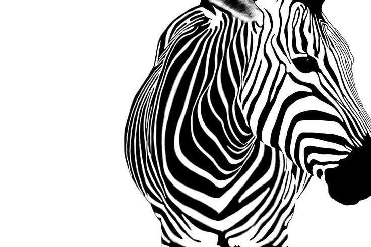 シマウマ - 画拓|フリー画像・写真素材集