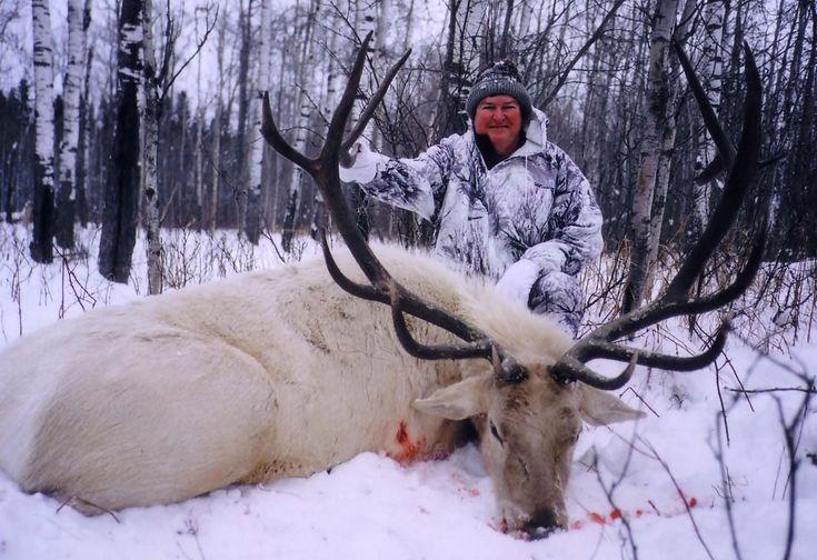 Russian White Elk