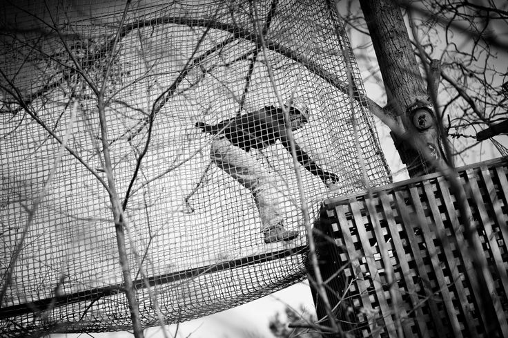 #kolibki #kobiety # dzień kobiet # wspinaczka #climb #adventure park #rope place #event #woman