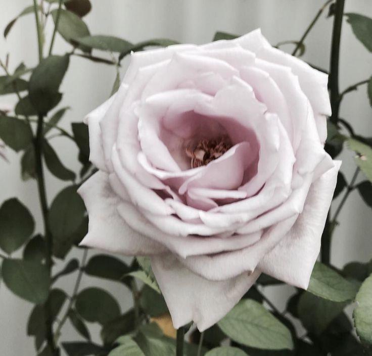 more flowers🌸 #flower