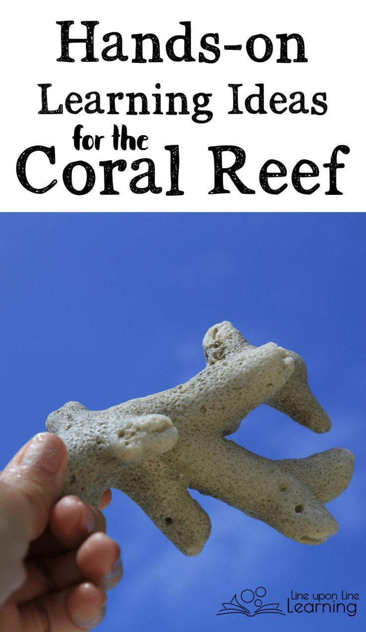 Handson Learning Ideas For The Coral Reef
