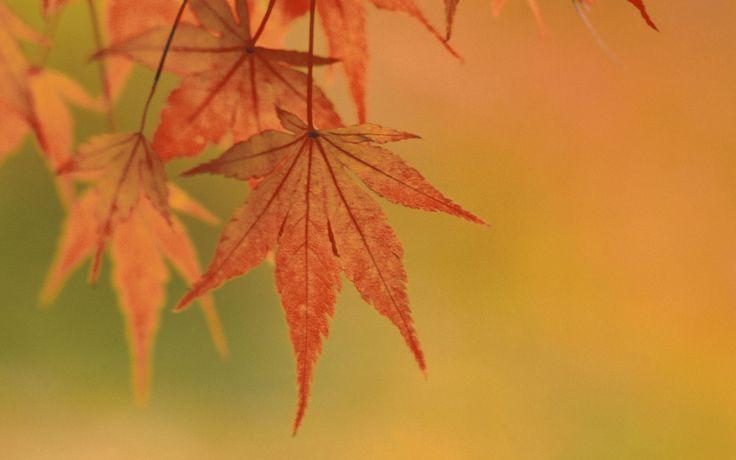 Colors-4Life.com - Maple