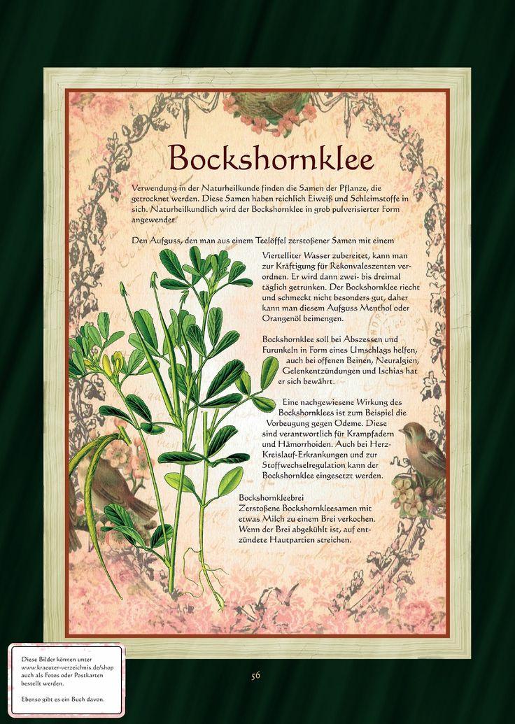 Bockshornklee - Bockshornkleetee
