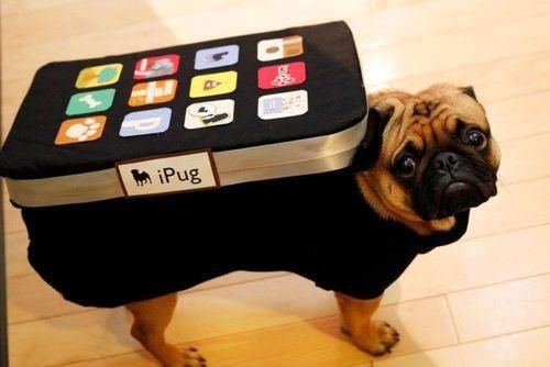 iPug Dog Costume Idea Pet Costumes Dog Halloween Costumes Pets