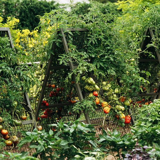 One idea to grow tomatoes: Two  screens leaning against each other. Tie together at top with wire to keep together, or secure hinges to frame, and create hinge.