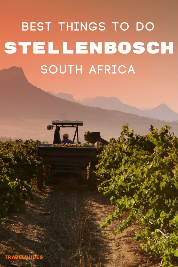 The ultimate guide to exploring Stellenbosch, South Africa's world-renowned wine region. Best vineyards and wineries for wine tasting, top restaurants and local cuisine, where to stay + tips and things to do for families visiting with young children. Travel in South Africa. | Travel Dudes Travel Community#Stellenbosch #SouthAfrica