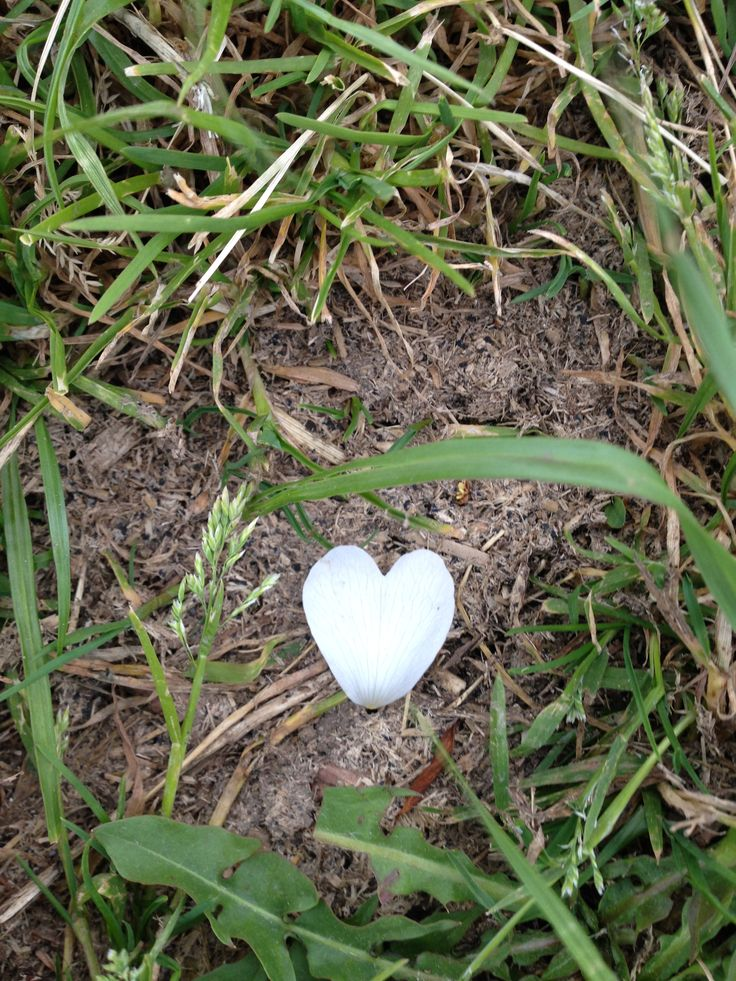 Walking through my local field this beautiful petal reflected 'Walk With Your Heart'.