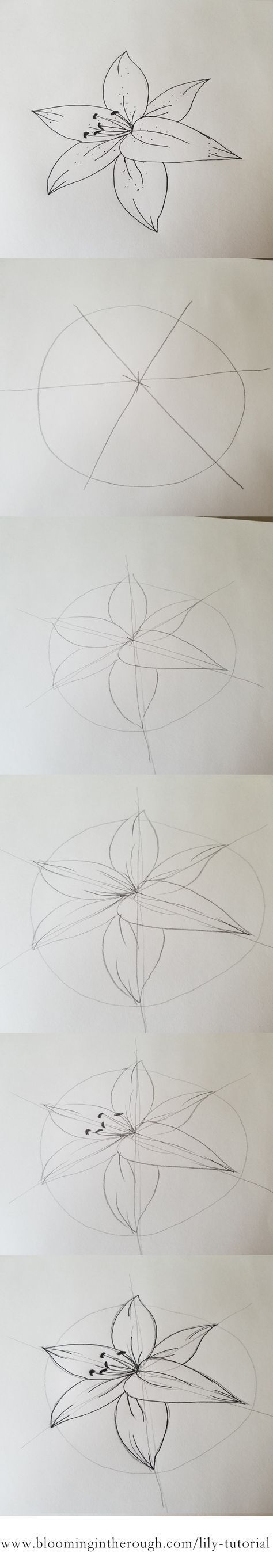 How to draw an easy Lily. Step by step guide tutorial with pictures and a free printable!