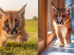 The Cutest Species Of Cat Has Finally Been Found