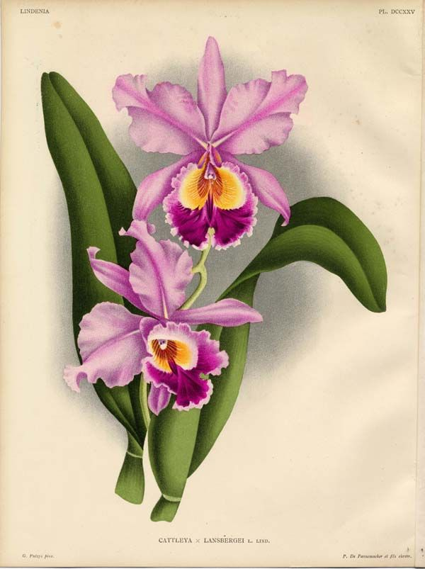 orchid sample