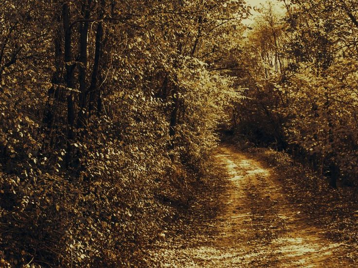 road leading to the river by Cesare Vatrano
