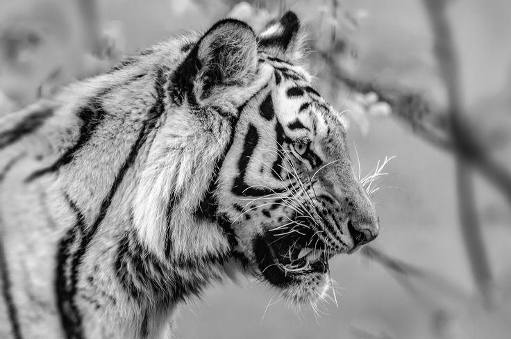 Predator by Graziella Serra Art & Photo on 500px