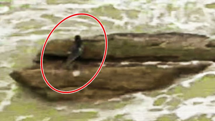 The New Evidence of Real Mermaid Found : Government Trying to Hide.
