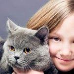 Géo Ado : Les bars à chats : pour ou contre ?