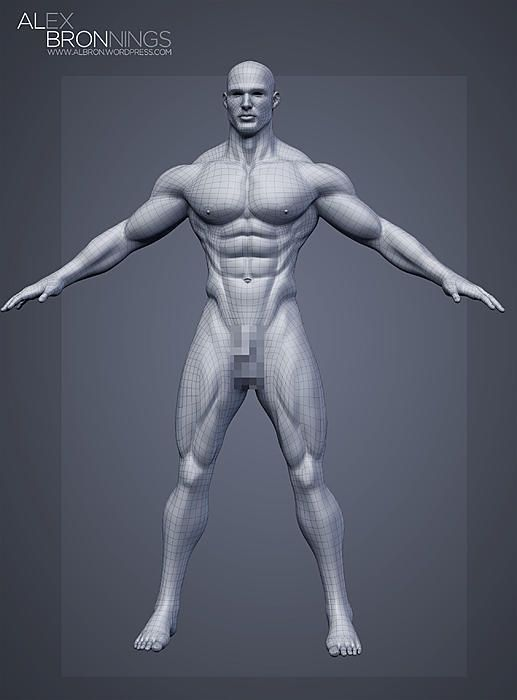 846 Best Male Anatomy Images On Pinterest Human Anatomy Human