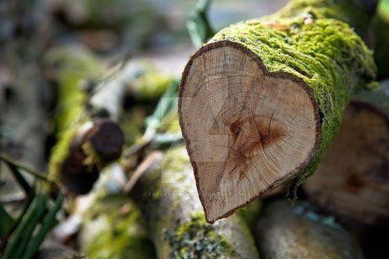 """heart""wood"