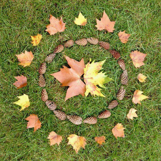 Land art cercles de feuilles