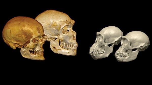 """""""DNA from Neandertal relative may shake up human family tree"""" -- """"The possibility that humans were a distinct group so early shakes up the human family tree, promising to lead to new debate about when and where the branches belong."""""""