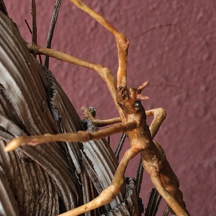28 best LuceFLY Clay Insects images on Pinterest | Insekten ...