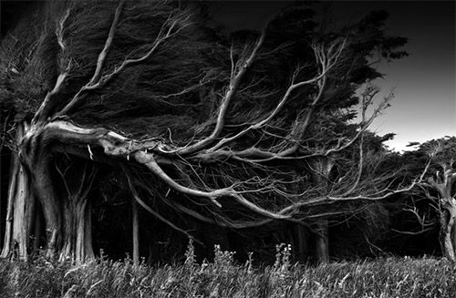 Baum.!!! [black and white]