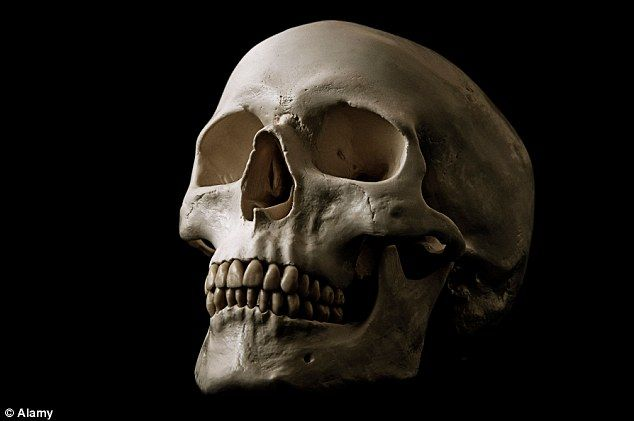 Mystery: Police say the skull appears to be old but have not released any further informat...