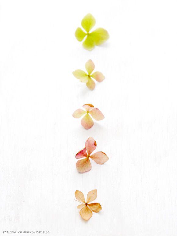 Shades of hydrangea.