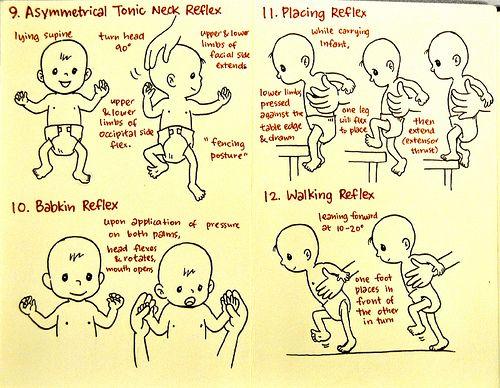 Primitive Reflexes Part 3 of 3
