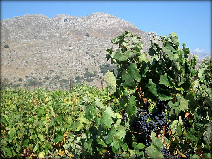 Amari valley,  Crete in September