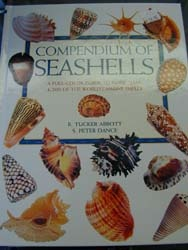 Sanibel seashells sea shell books