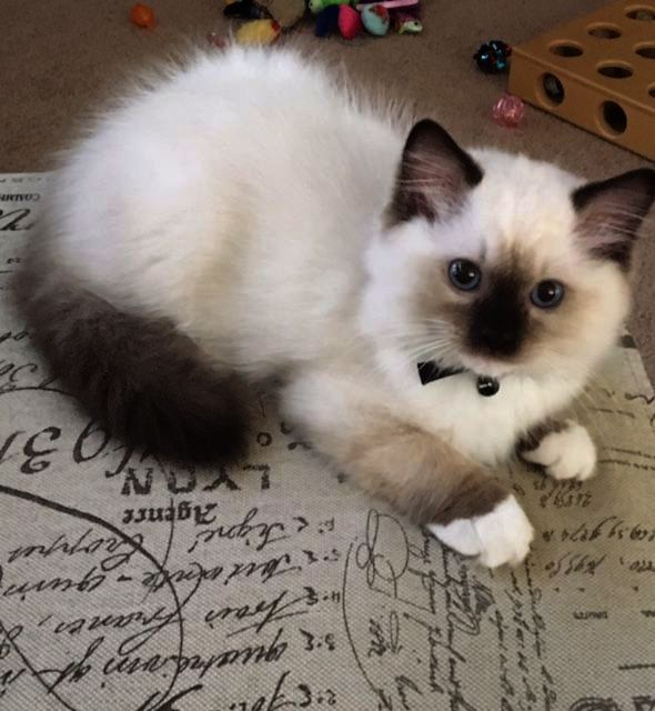 Kittens For Free Adelaide So Kittens For Free Soon Kittens And Puppies And Babie Gatos Bonitos Gatitos Lindos Animales Adorables