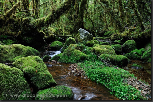 Temperate rainforest in northern Patagonia of Chile, Cochamo Valley