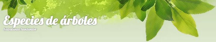 Especies de árboles. Conoce los árboles utilizando códigos QR
