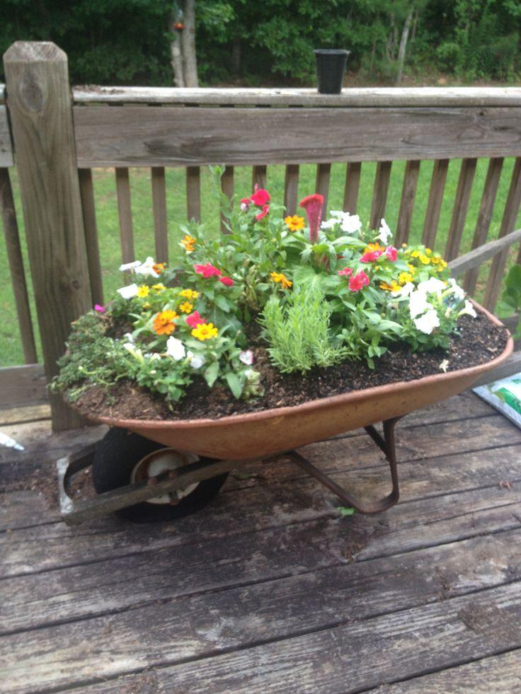 My wheelbarrow garden!
