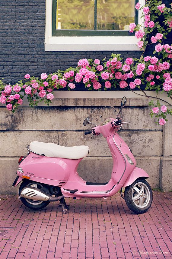 Europe Travel Photography Title: Pretty in Pink The cutest pink Vespa, parked just perfectly under tumbling pink roses, found on a recent trip to