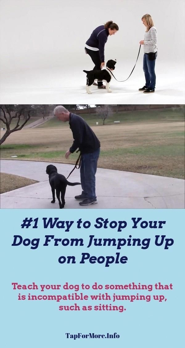 Stop Dog Jumping And Teach Dog To Walk On Leash Check Pin For