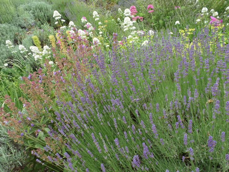 Lavendel.