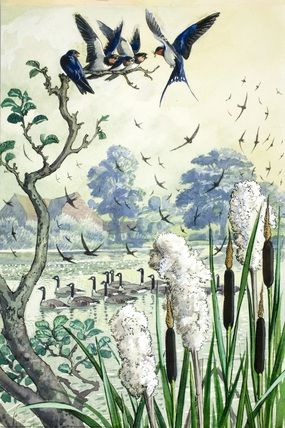 Swifts and swallows over a river C. F. Tunnicliffe