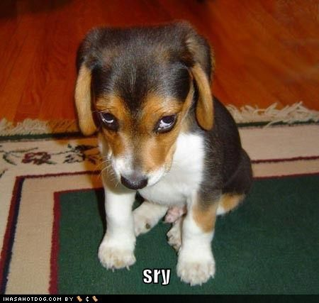 ees okay:): Cute Animal, Puppies Faces, Puppies Dogs Eye, The Faces, Puppies Eye, Pet Photos, Beagle, Funny Pet, Dogs Faces