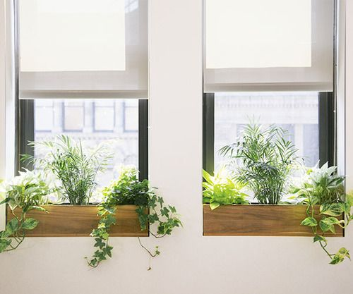 Indoor window boxes with leafy greens.