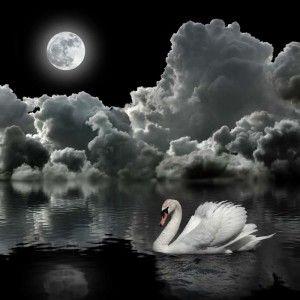 Tb _11175 Svan, moln och måne