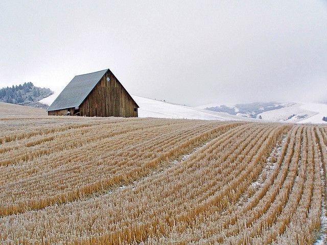 Mill Creek Road Barn and Frosted Wheat Stubble Near Walla Walla, Washington | Flickr - Photo Sharing!