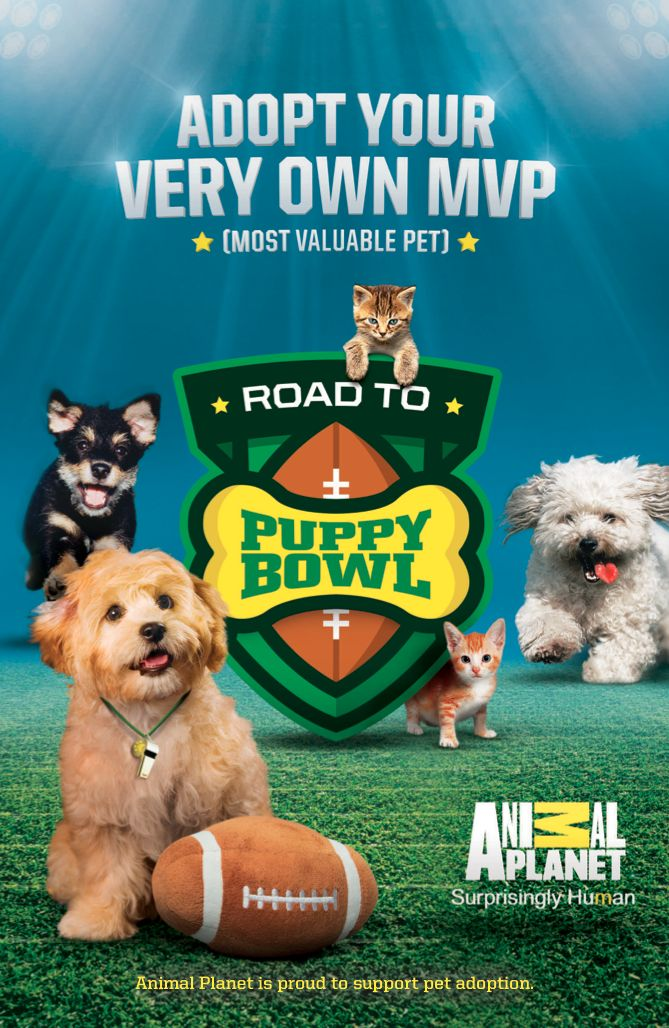 Join Animal Planet The Houston Spca And Players From The Houston Texans On Tuesday Oct 28 From 3 P M To 7 P M For Pet Adoption Animal Planet Puppy Bowls