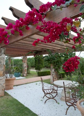 bougainvillea over pergola - Google Search