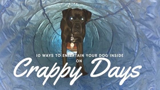 K9sOverCoffee | 10 Ways To Entertain Your Dog Inside on Crappy Days |  If may seem difficult to entertain your pups on those extra crappy days where the rain or snow just keeps falling, but our pack came up with some fun indoor boredom busters!  http://www.k9sovercoffee.com/fitness/10-ways-to-entertain-your-dog-inside-on-crappy-days/