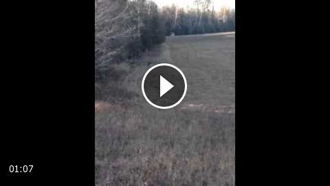 Fearless dumb deer